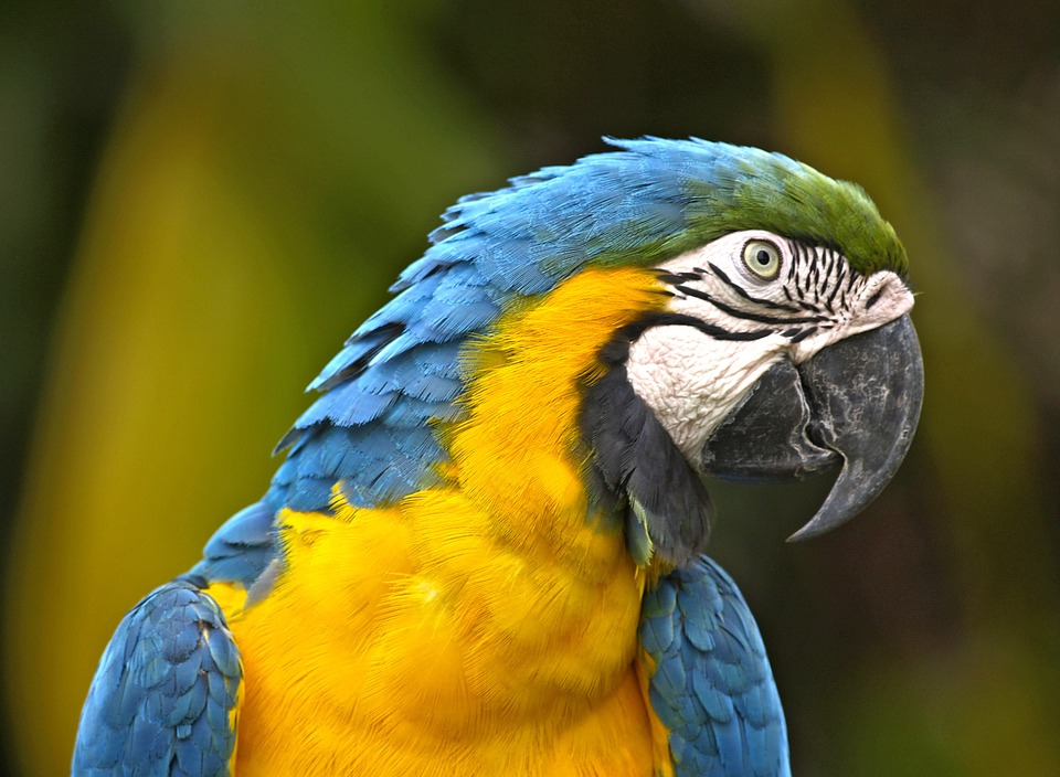 Have an unforgettable memory with the tame macaws